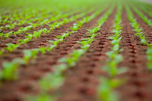 Duurzaam ondernemen bij Plantenkwekerij P. Mostert