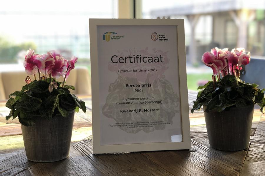 Certificaat 1e prijs cyclamen Plantenkwekerij P. Mostert